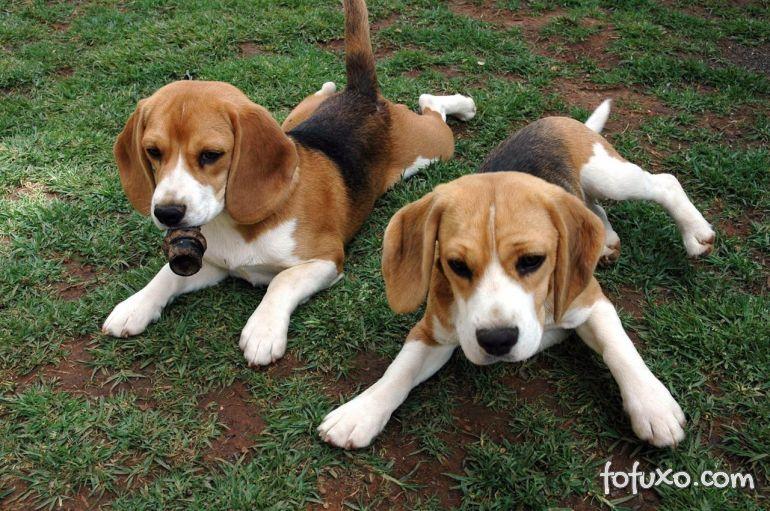 Erros que os donos não podem cometer com filhotes de cães