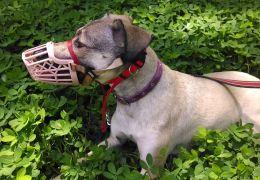 BH também pode proibir cães sem coleiras e focinheiras nos parques