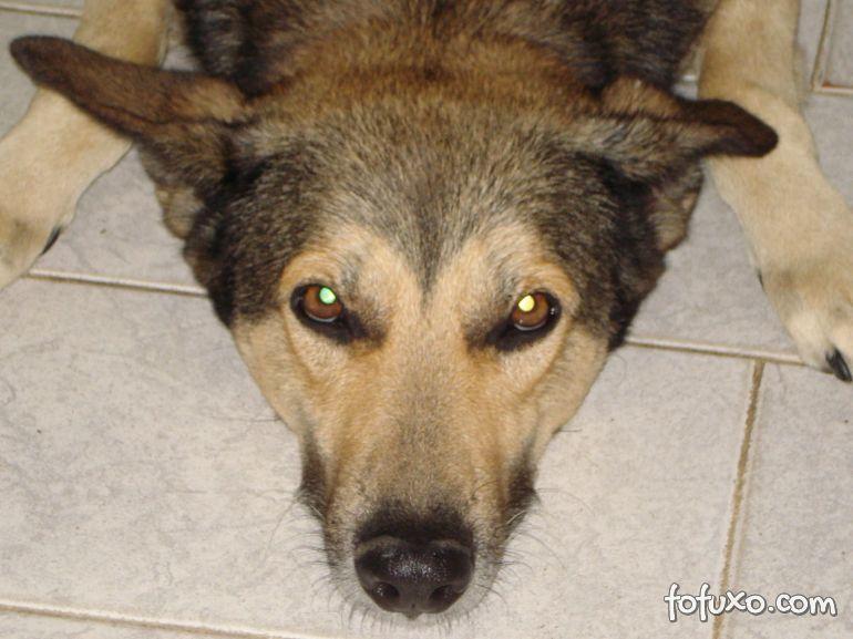 Seriam os cães telepatas?