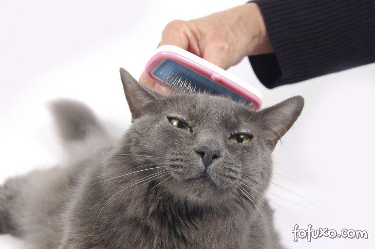 Dicas na hora de escovar os pelos do seu gato
