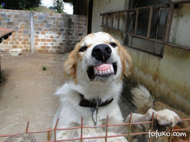 Por que algumas pessoas possuem medo dos cães?