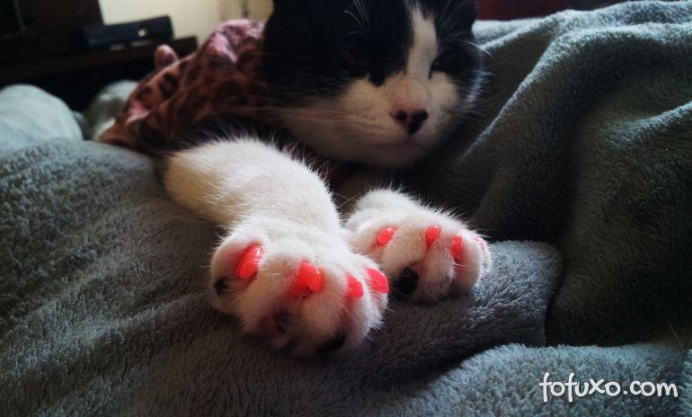 Você conhece as unhas postiças para gatos?