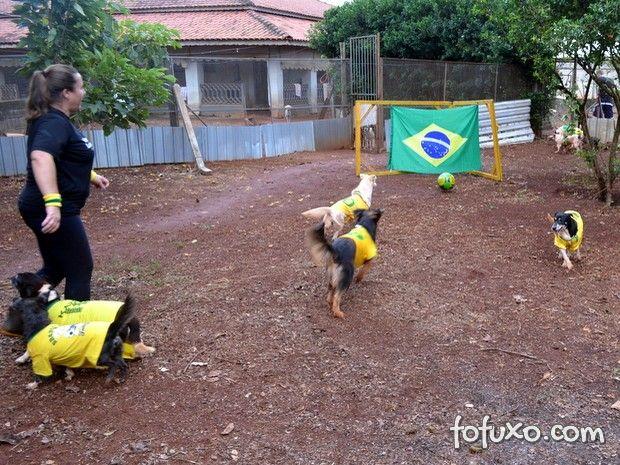 Cães de ONG jogam futebol para serem adotados