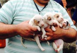 Ativistas retiram cães de dentro de container em Santos (SP)