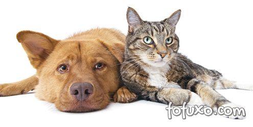 Curiosidades cães e gatos parte 1