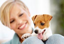 Mulheres preferem cachorro do que seus namorados