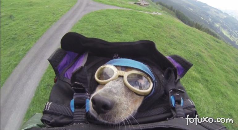 Conheça o primeiro cachorro a saltar de Base-Jump