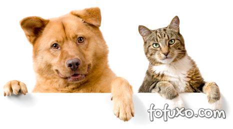 Curiosidades cães e gatos parte 2