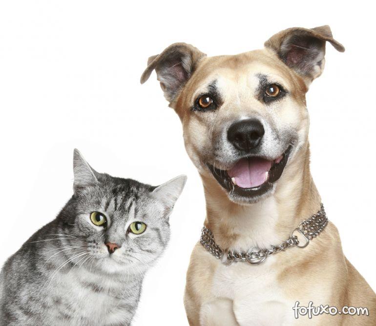 Estudo aponta diferenças na personalidade de donos de cães e gatos
