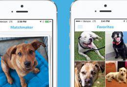 Aplicativo ajuda a encontrar donos para cães abandonados