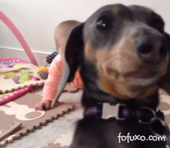 Cachorrinho fica com ciúmes do bebê