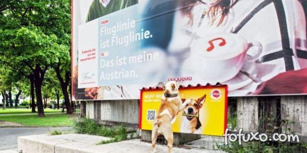 Empresa cria outdoor especialmente para os cães