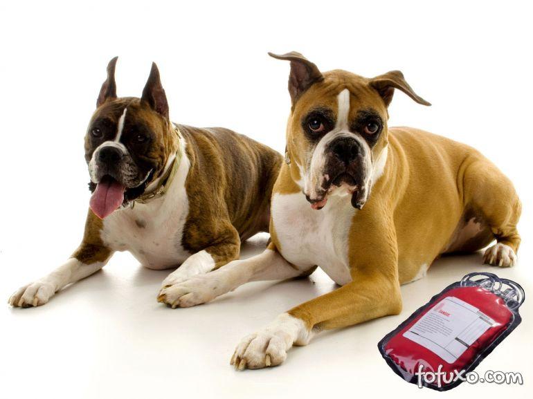 Iniciativas tentam aumentar estoque de sangue de cães