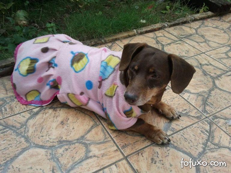 Dicas para comprar roupas para o seu cão neste inverno