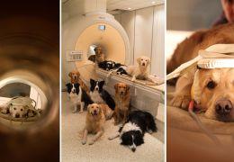 Cachorros podem identificar câncer em seres humanos