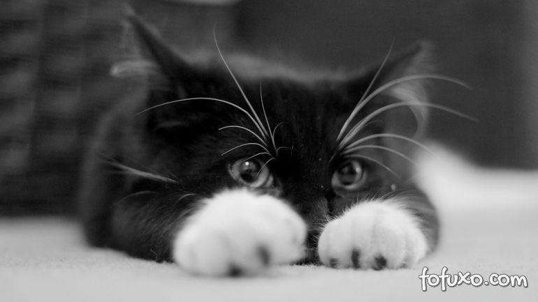 Frequência do xixi dos felinos pode indicar problemas de saúde