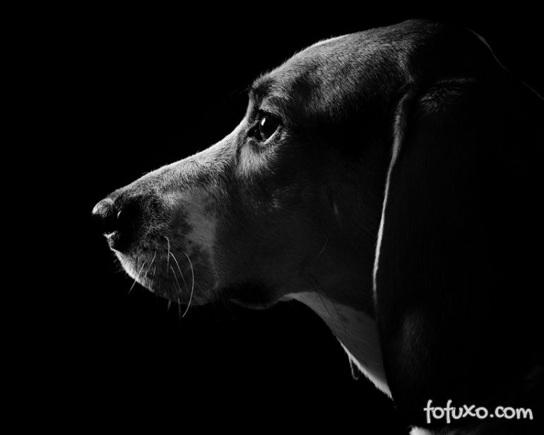 O que os cachorros enxergam quando apagamos a luz?
