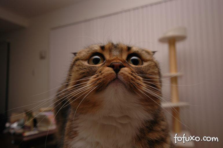 Gatos também se assustam com barulhos altos
