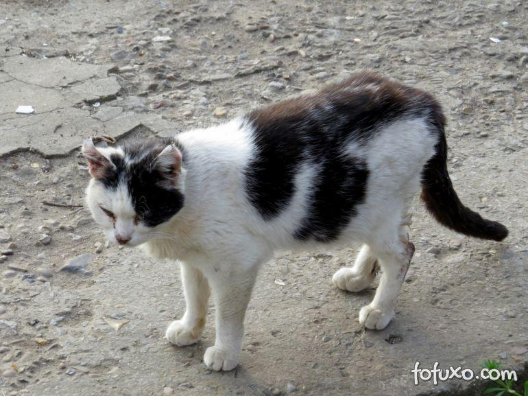 Diarreia em gatos – Entenda o que pode estar por trás