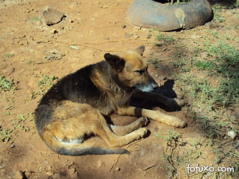 Vídeo flagra desespero de cão ao ver outro morto