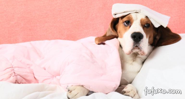 Dicas para ajudar os cães com nariz entupido