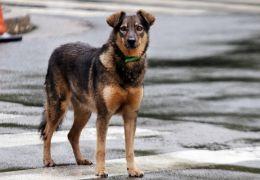 Projeto coloca cães abandonados levando pessoas solitárias para passear