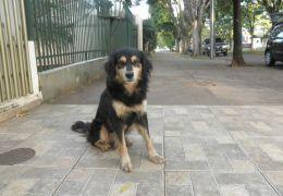 Prefeitura planeja dar descontos no IPTU para quem adotar animais