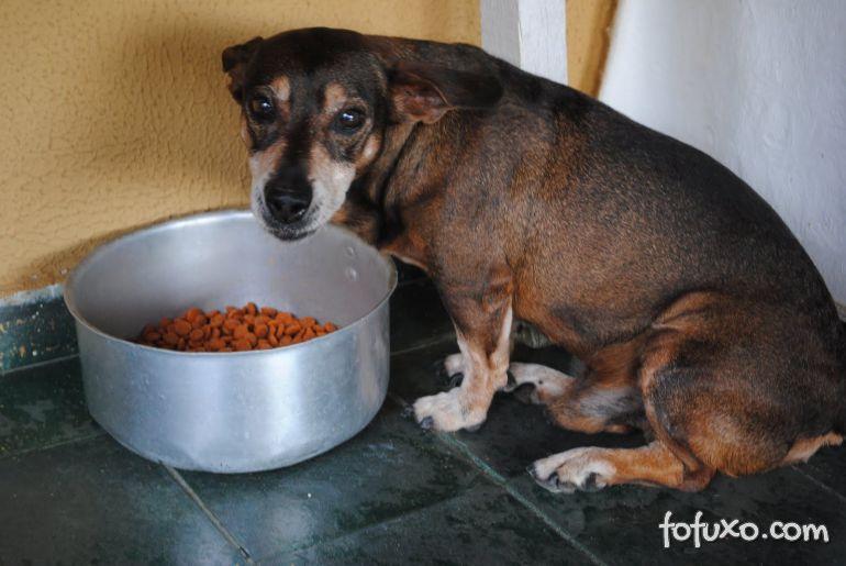Alimentos proibidos para cães idosos