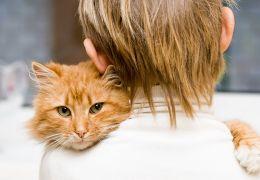 Como deixar o seu gato com um estranho