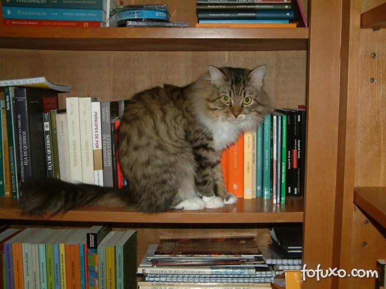 Dicas para ensinar os gatos a não pular em móveis