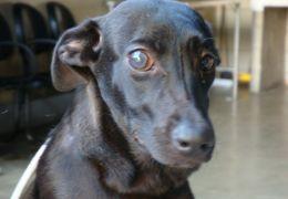 Como identificar problemas de visão em cães e gatos