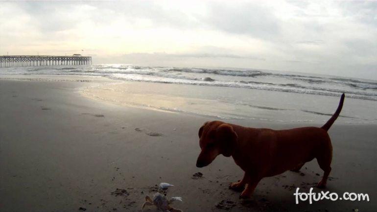 Quando o cão encontra o caranguejo