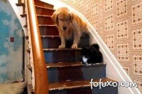Cão fica com medo de descer as escadas por causa do gato