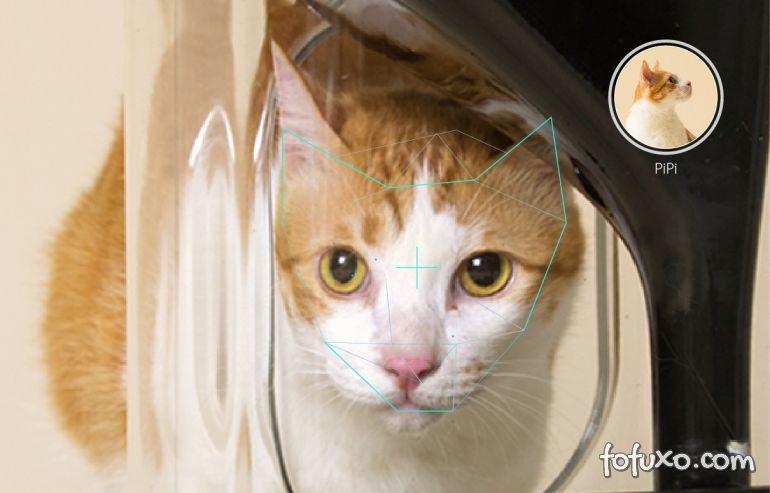 Equipamento alimenta gatos através de reconhecimento facial