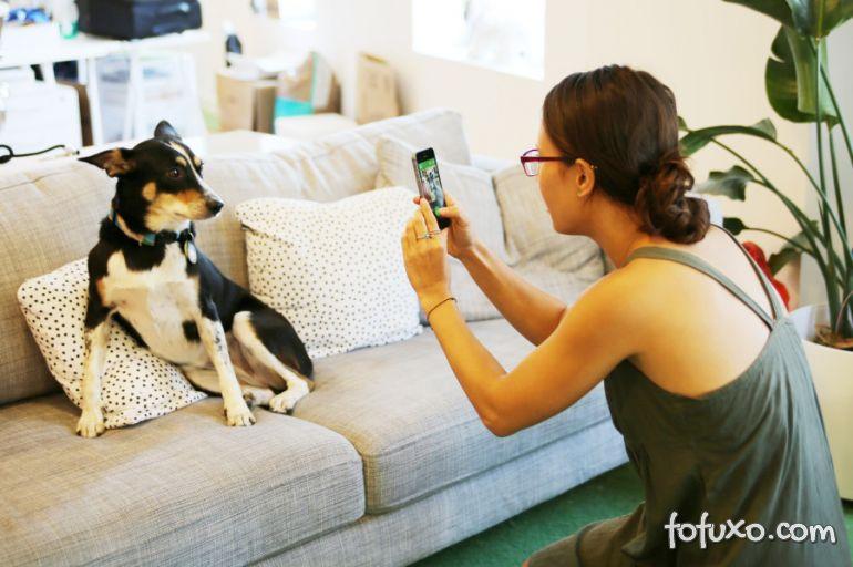 """Empresa lança """"Instagram para cachorros"""""""