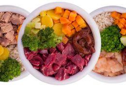 Projeto incentiva receitas culinárias naturais para cães