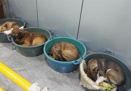 Exemplo: Casal dono de posto de gasolina acolhe animais de rua