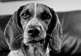 Novos estudos afirmam que cães sentem ciúmes