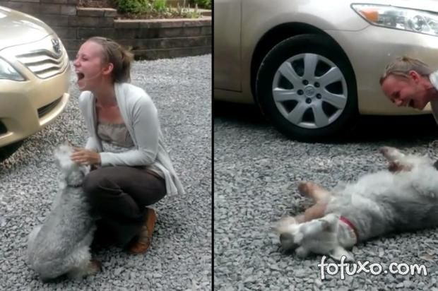 Cachorro desmaia ao reencontrar dona e vira hit na web