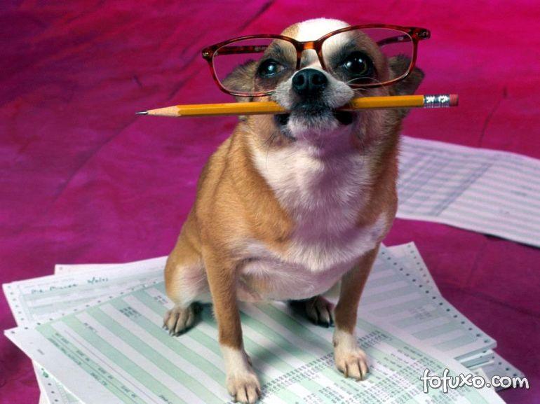 Cuidados com o orçamento na hora de adotar ou comprar um cão