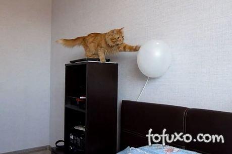 Gatinho se assusta estourando balão