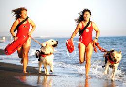 Praias italianas ganham cães salva-vidas