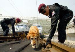 Polícia da Coreia do Sul vai clonar cães