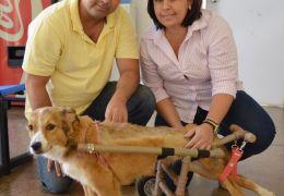 Casal de Minas Gerais cria modelo diferente de cadeira de rodas para cães