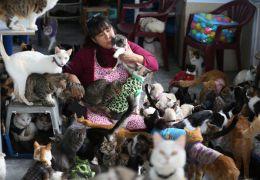 Enfermeira cuida de 175 gatos doentes