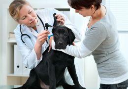 Saiba como é realizado um check up canino