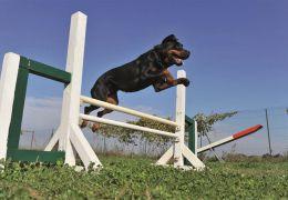 Cães vão ajudar na reabilitação de presos na Argentina