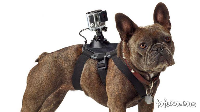 Empresa lança acessório para fixar câmeras em cães