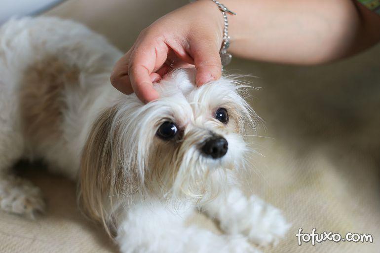 Saiba mais sobre a caspa em cães