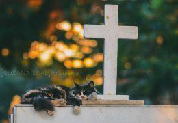 Confira ensaio com gatos em cemitérios